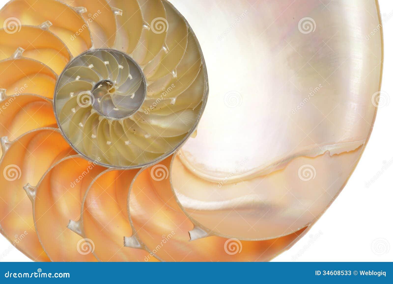 Shell do nautilus