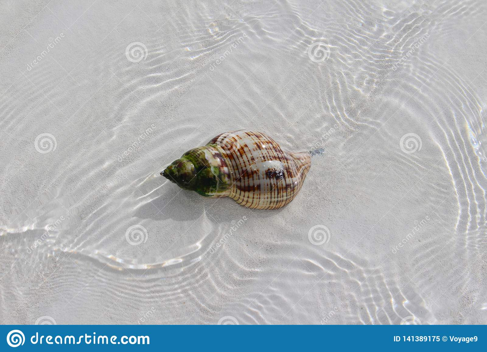Shell in een strand van een Caraïbisch eiland