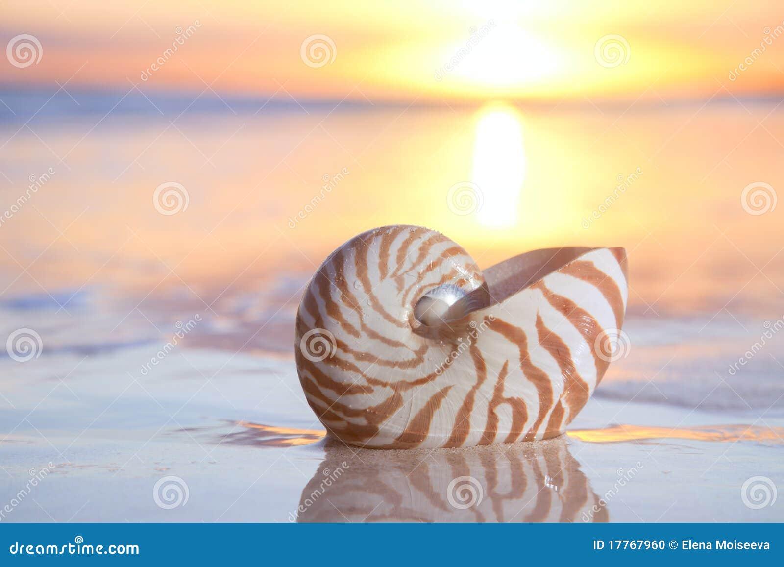 Shell en el mar, salida del sol del nautilus