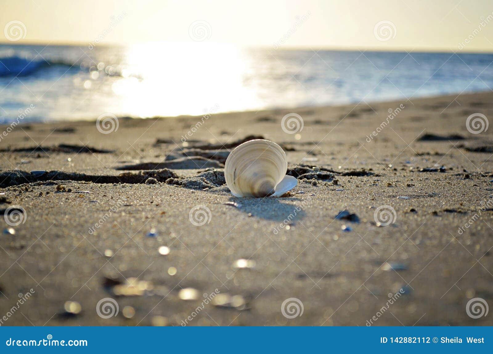 Shell en la playa en la salida del sol