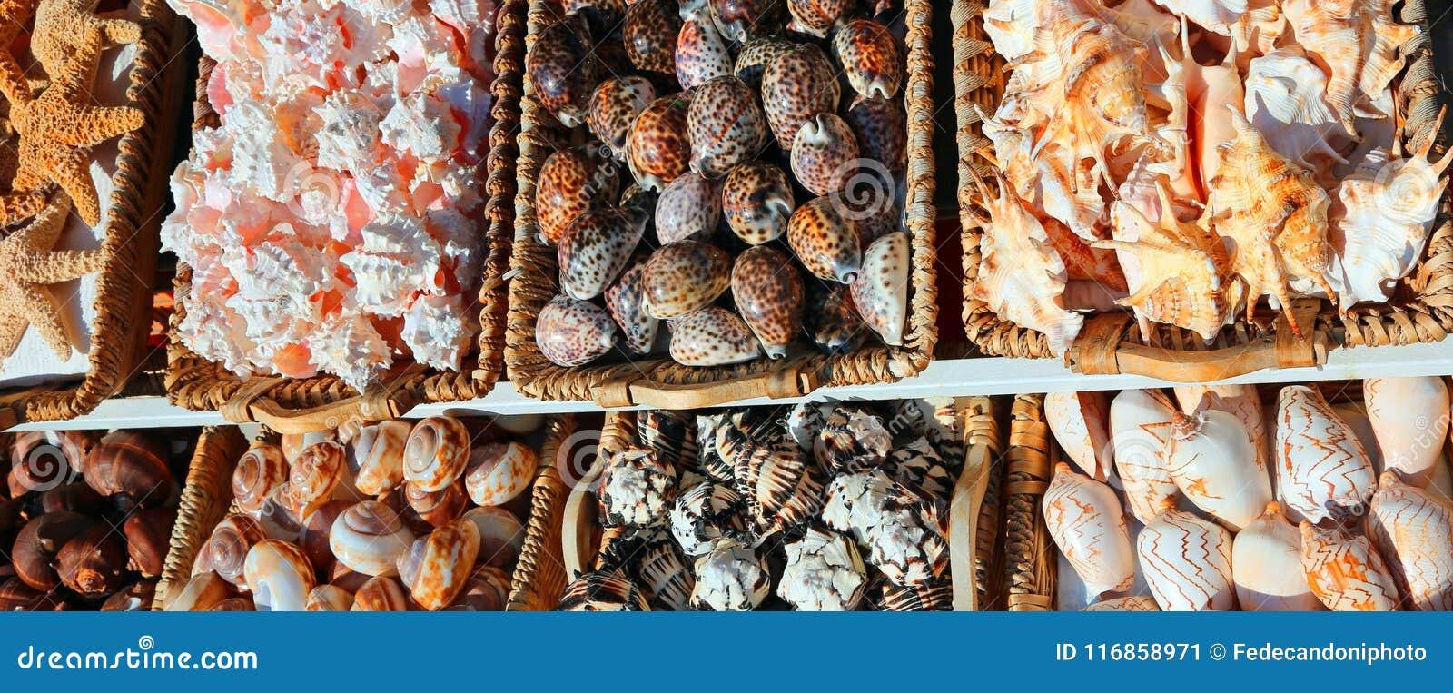Shell exóticos nas cestas em uma loja de lembrança