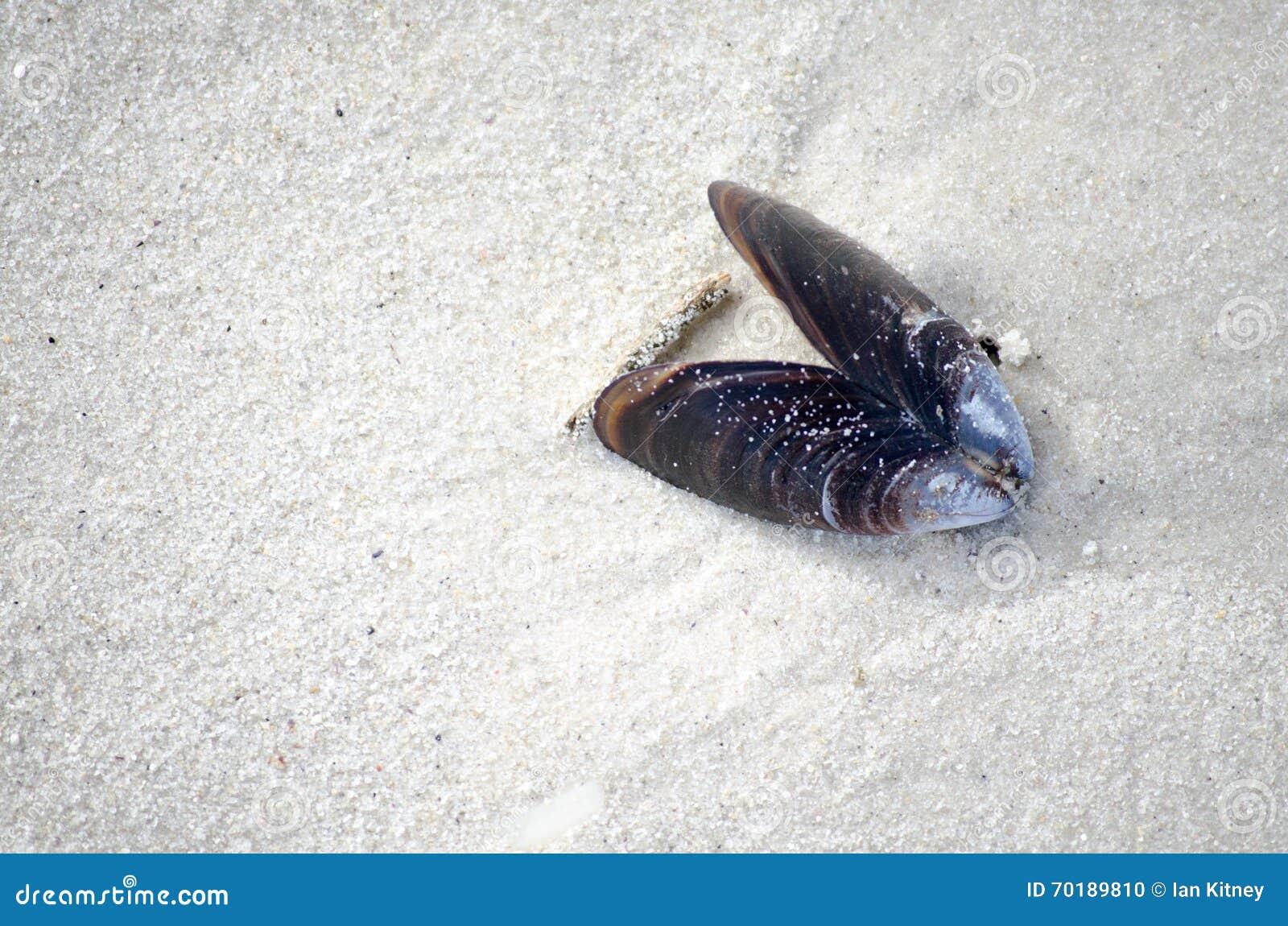 Shell i strandsand