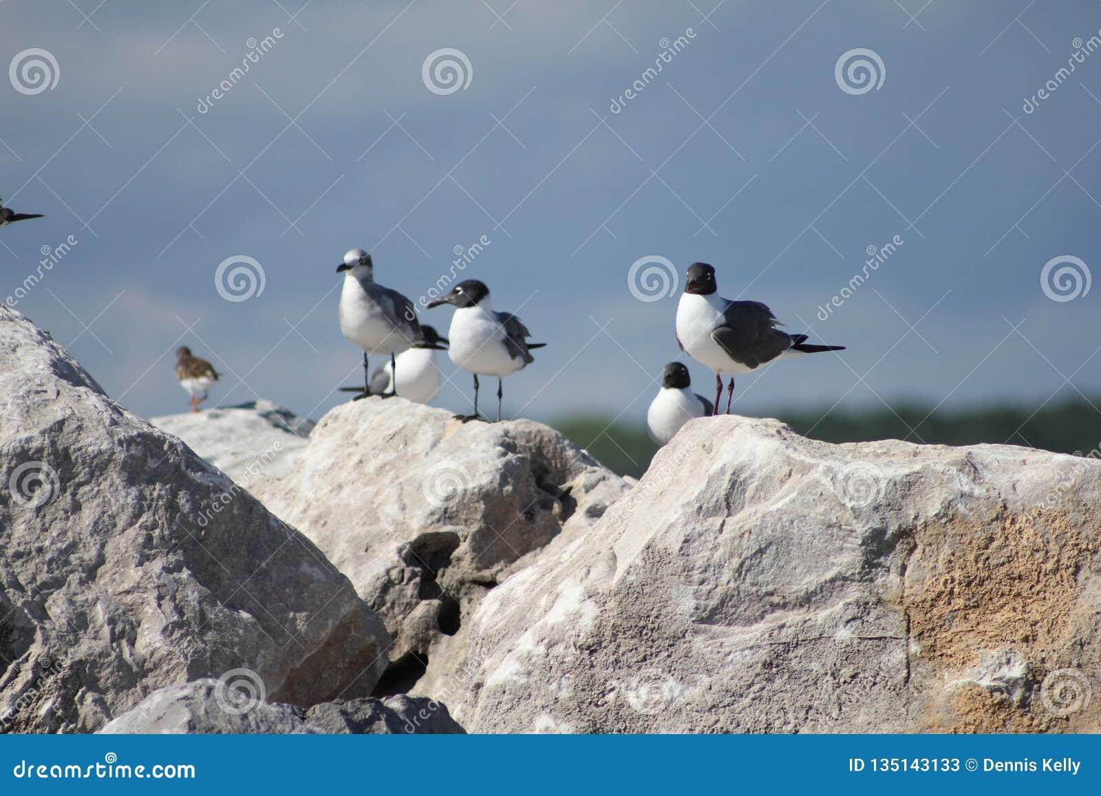 Shell Island, la Floride triche sur la plage de Panamá City de roches