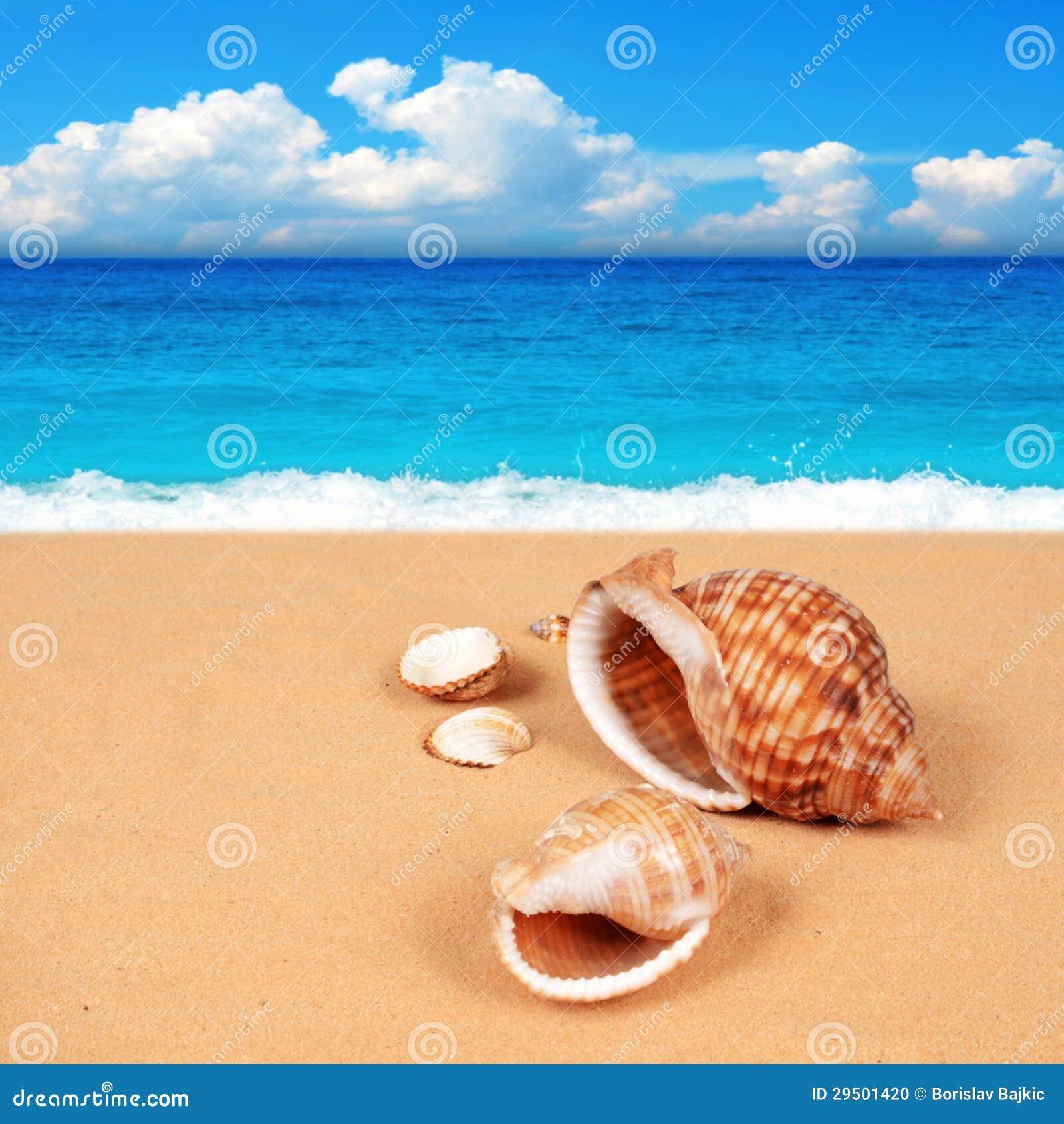 Shell op het zandige strand