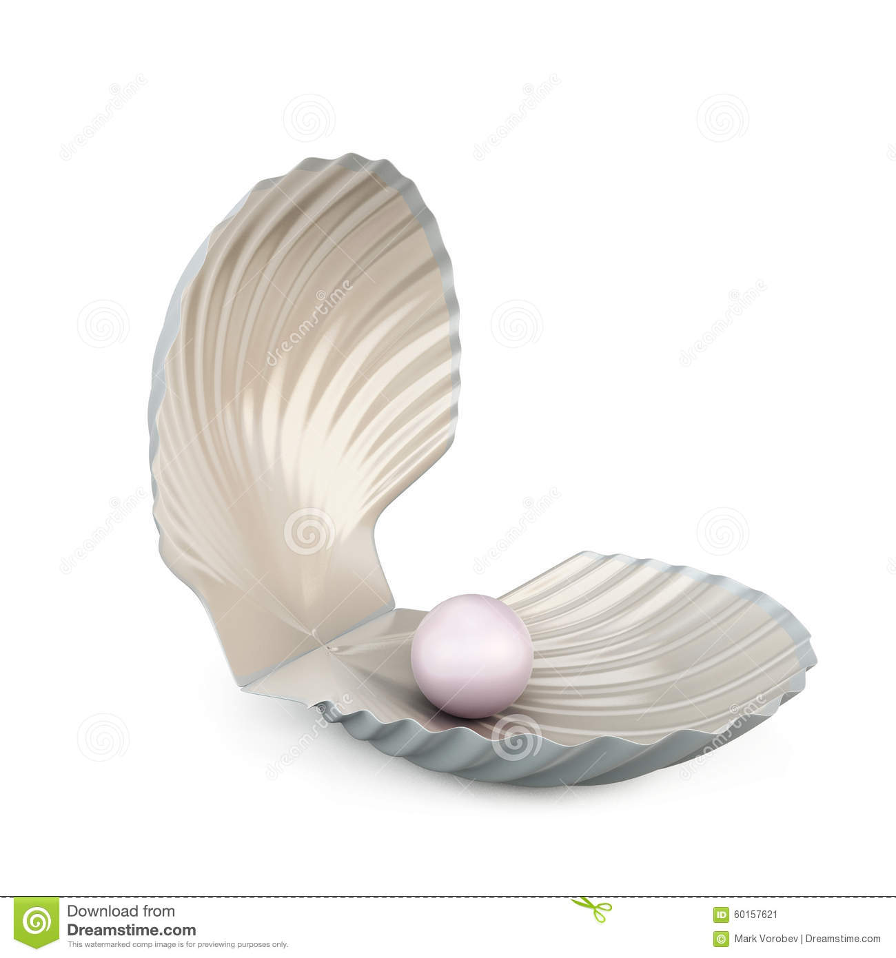 Shell Pearl On White Background. Stock Illustration ...