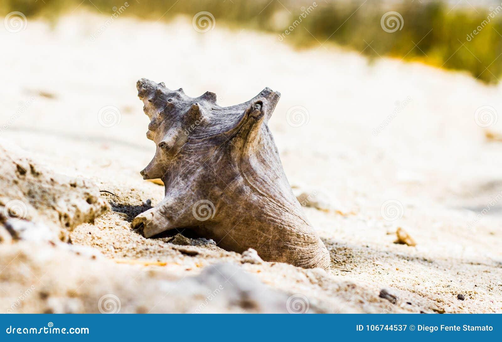 Shell a perdu sur la plage