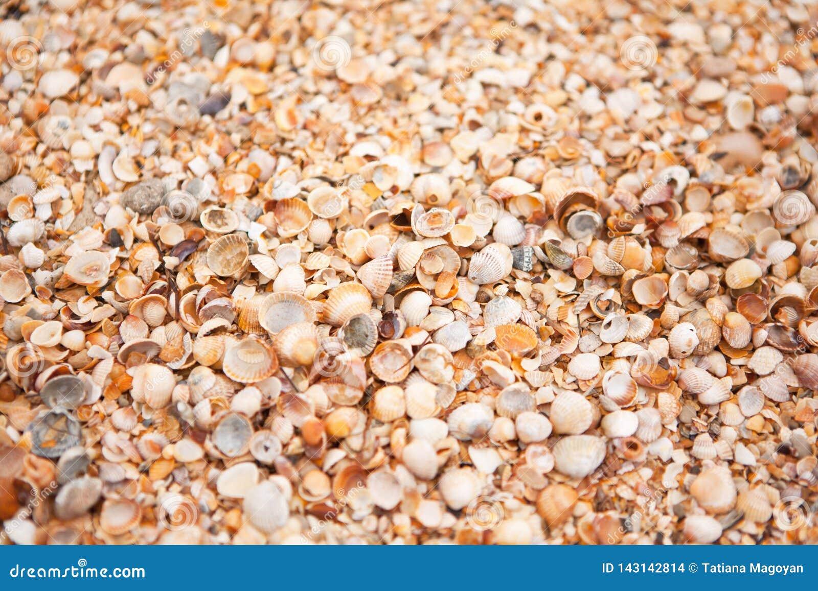Shell plaży tekstura Pojęcie podróż, czas wolny, relaks Tło z kopii przestrzenią dla projekta mockup, screensaver dla przyrządu