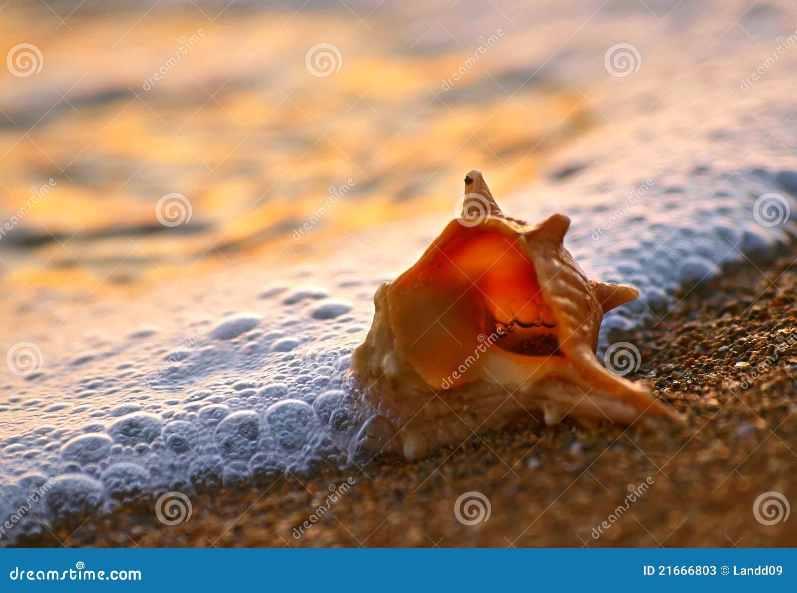 Shell on sand beach