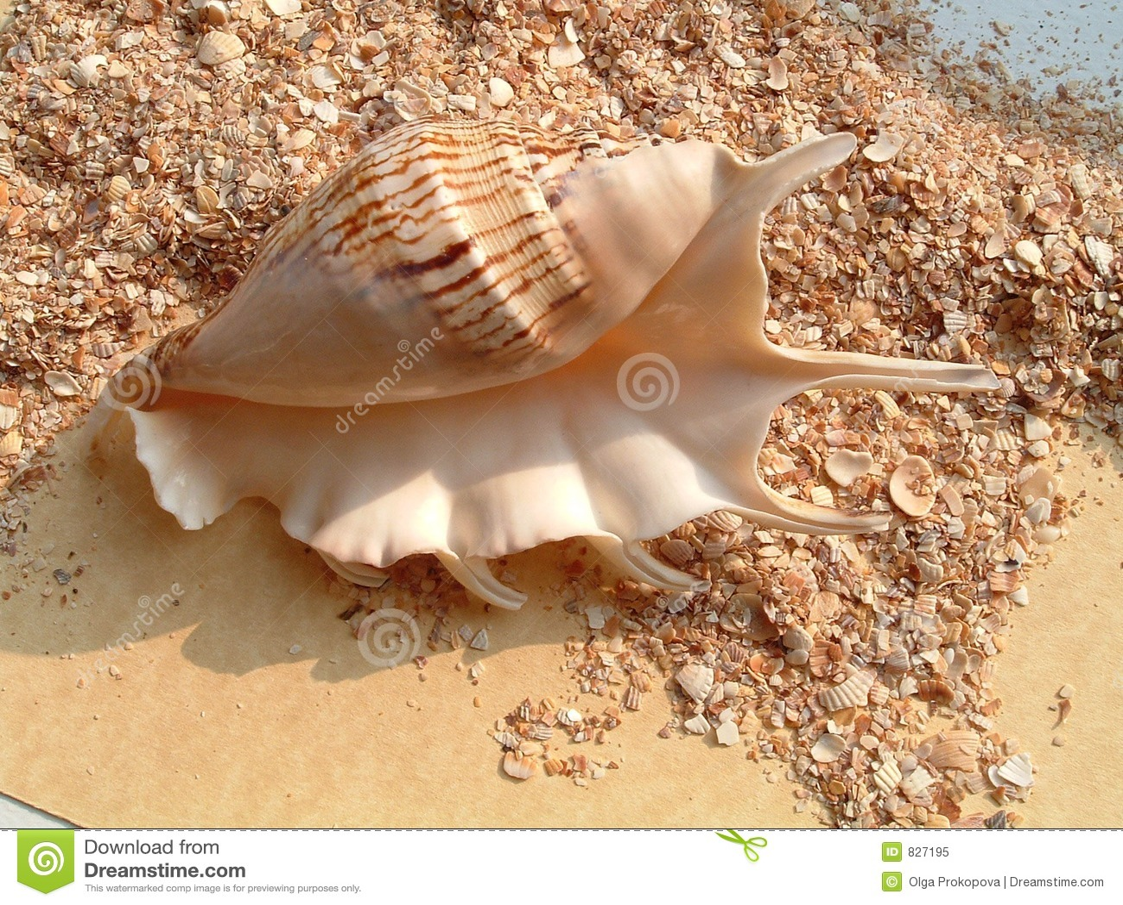 Shell on the stoun