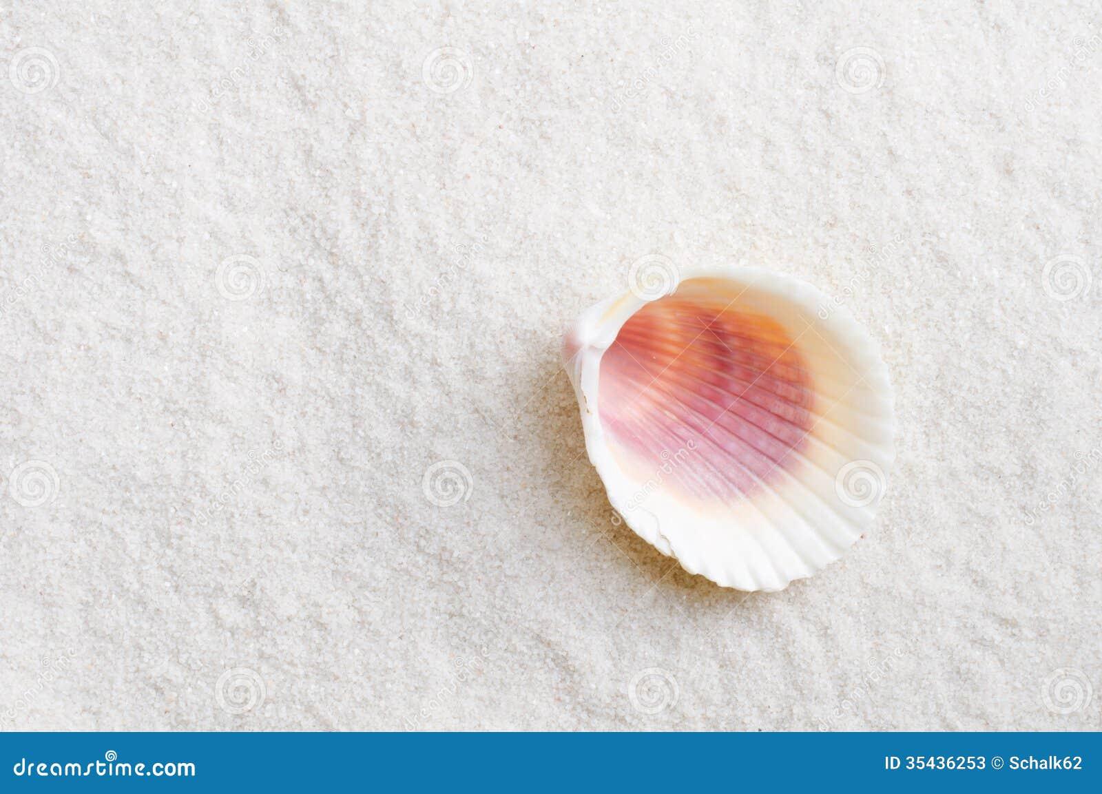 Shell sur la plage