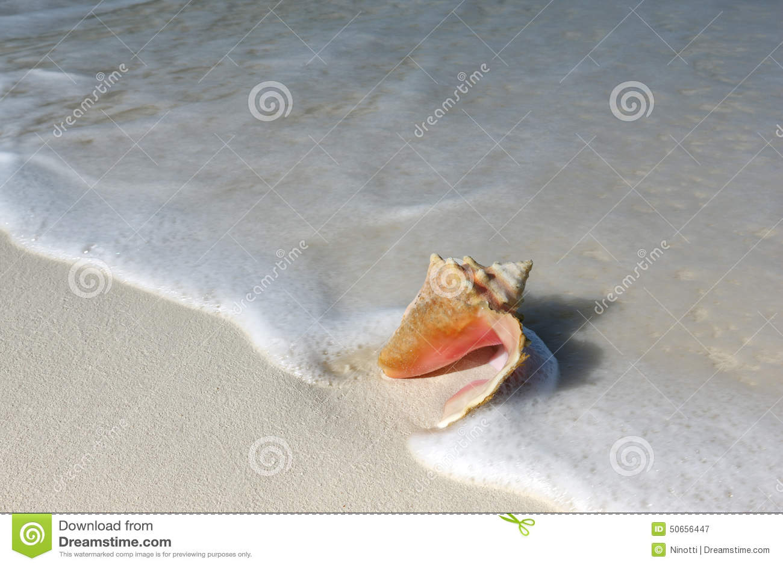 Shell sur le sable échouent