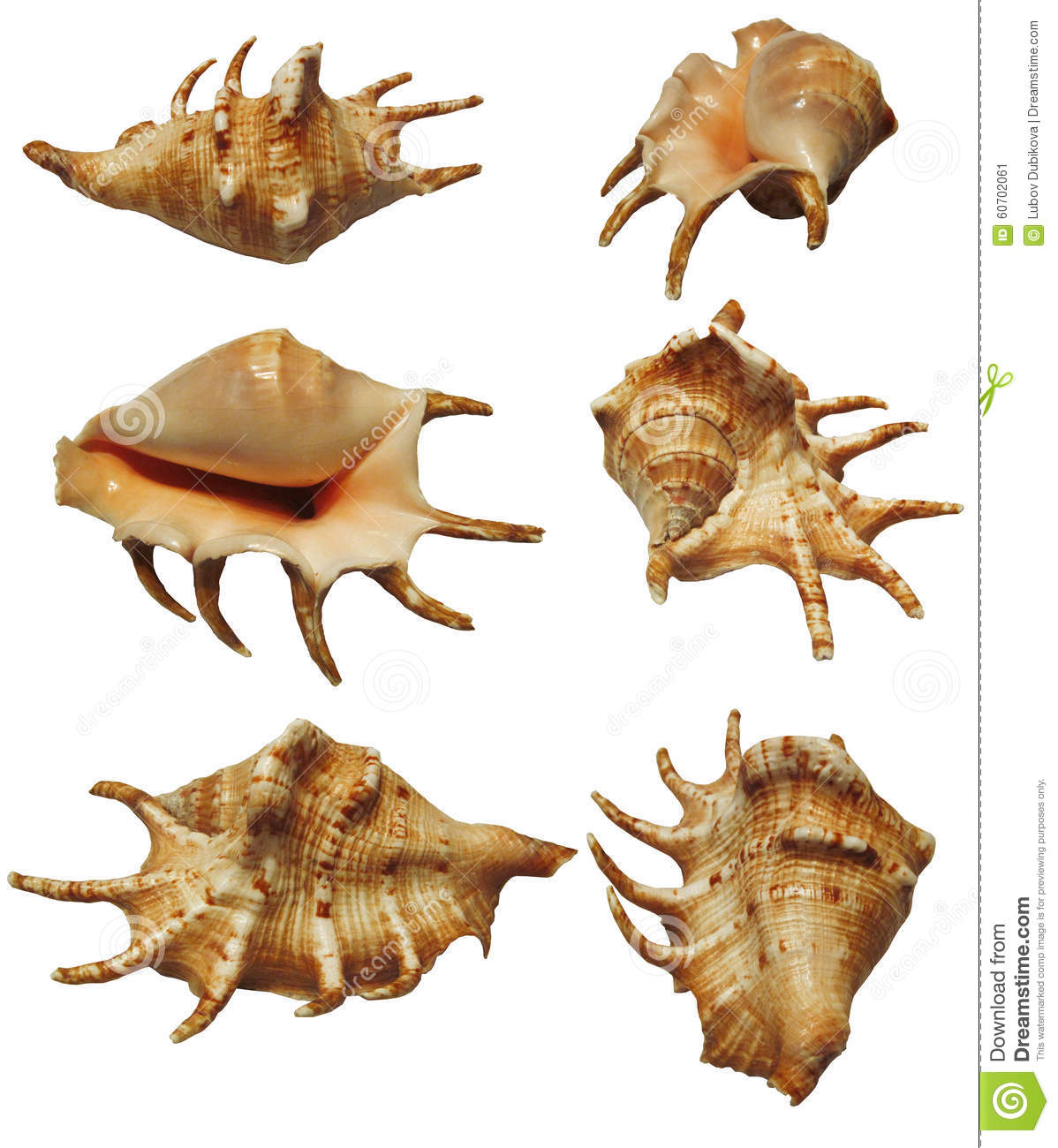 What type of shell is this