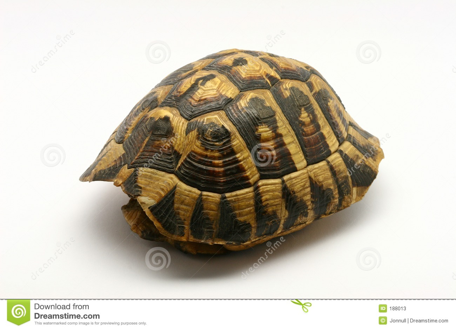 Shell vacío de la tortuga