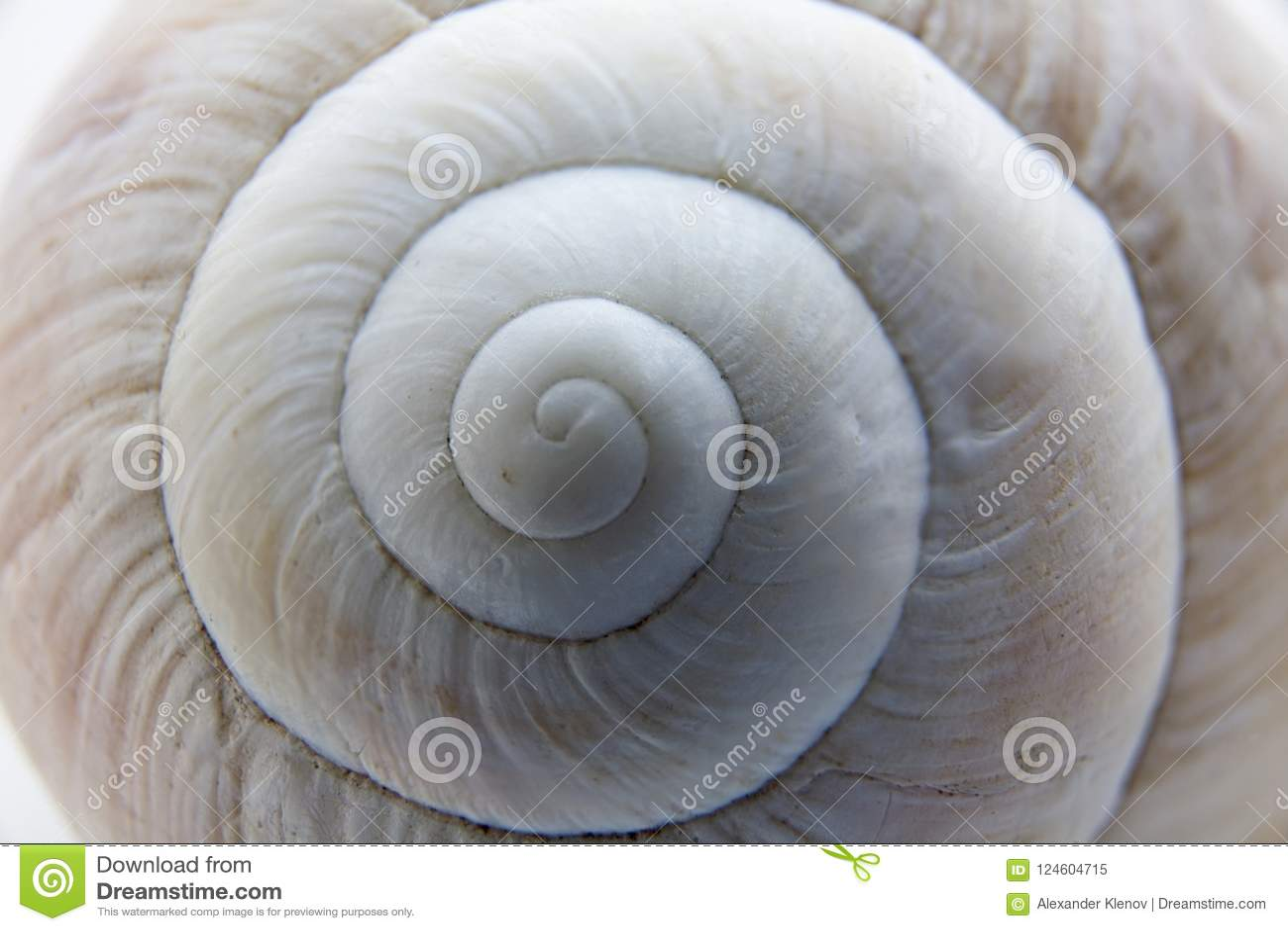 Shell van een close-up van de druivenslak