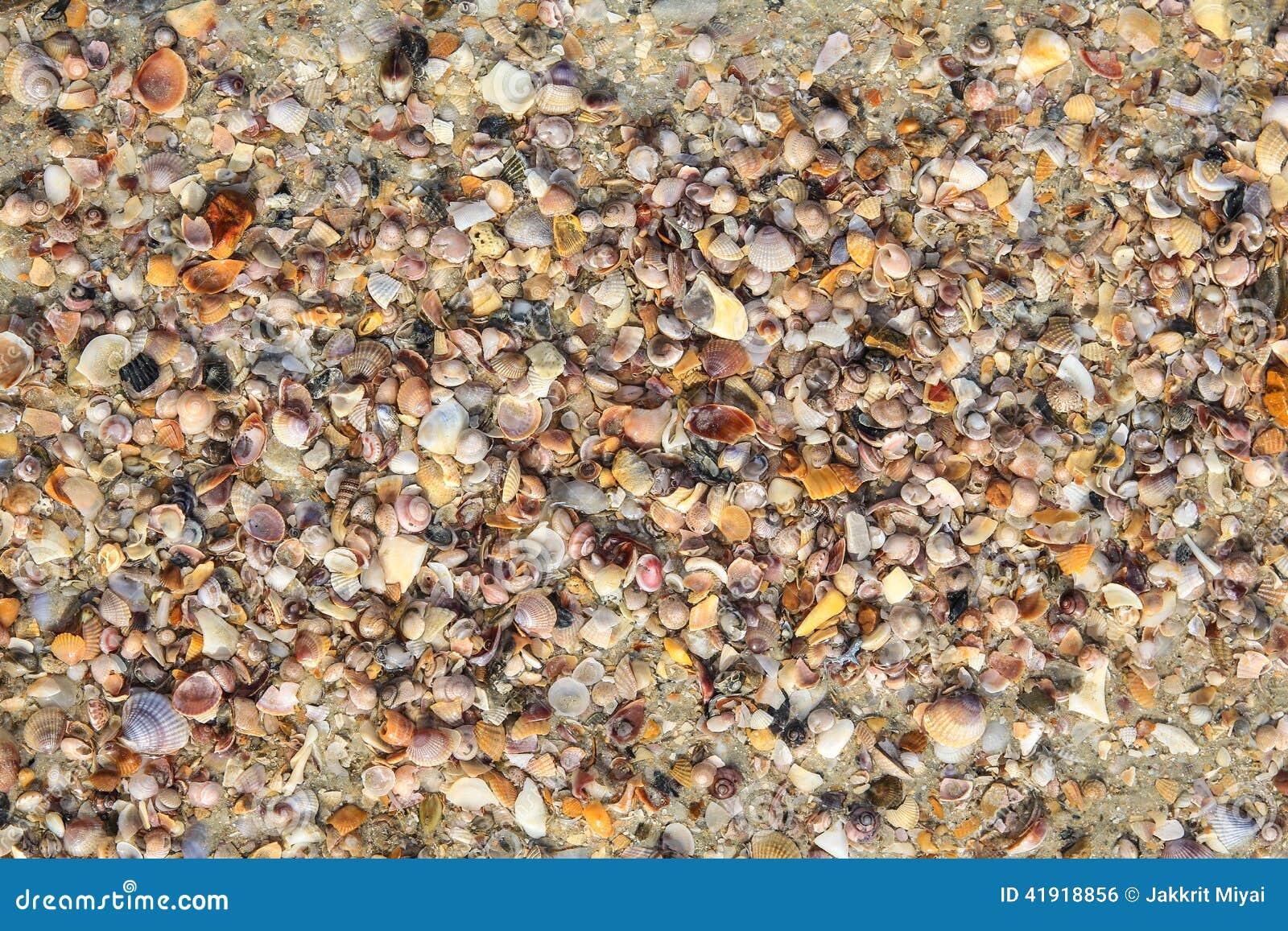 Shell y crustáceos