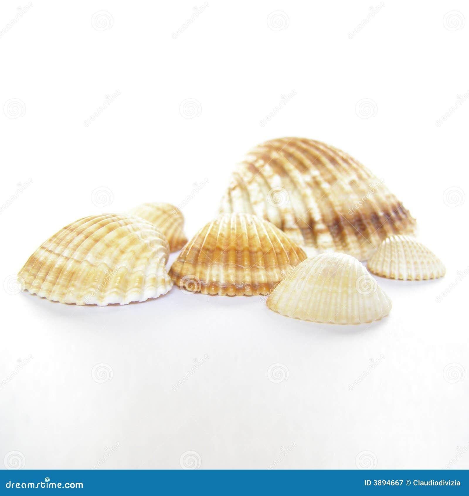 Shelles del mar