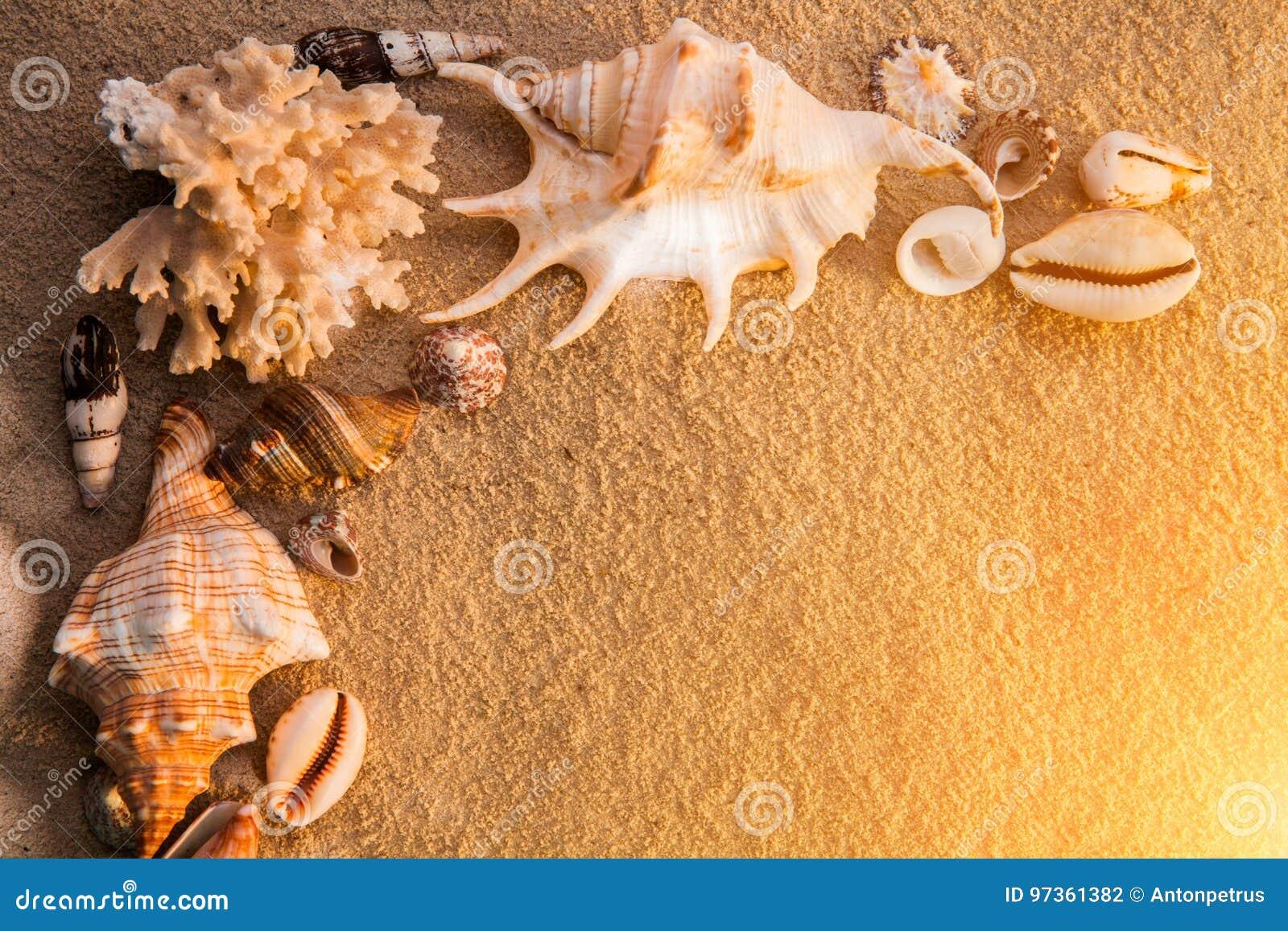 Shelles del mar con la arena como fondo Playa del verano