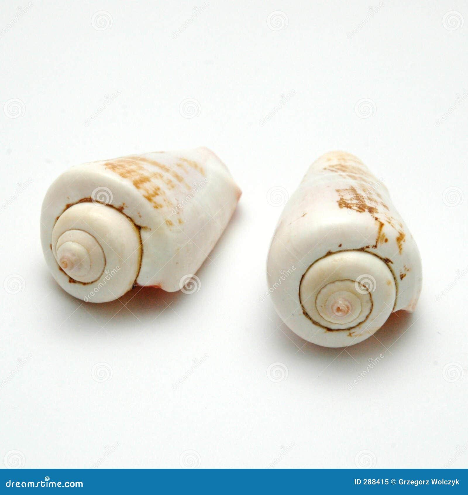 Shells_1