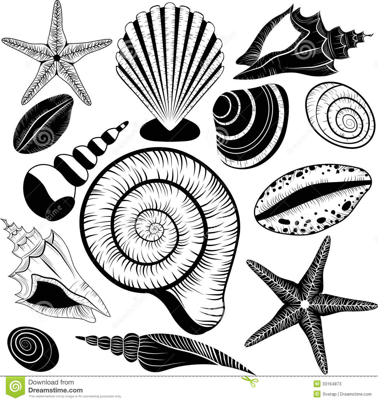Shells Collection. Vector Set With Seashells And Starfish Stock Photos ...