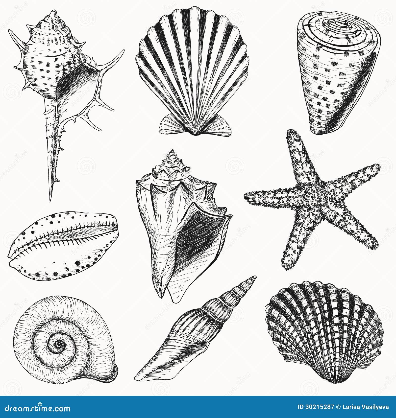 Shell set