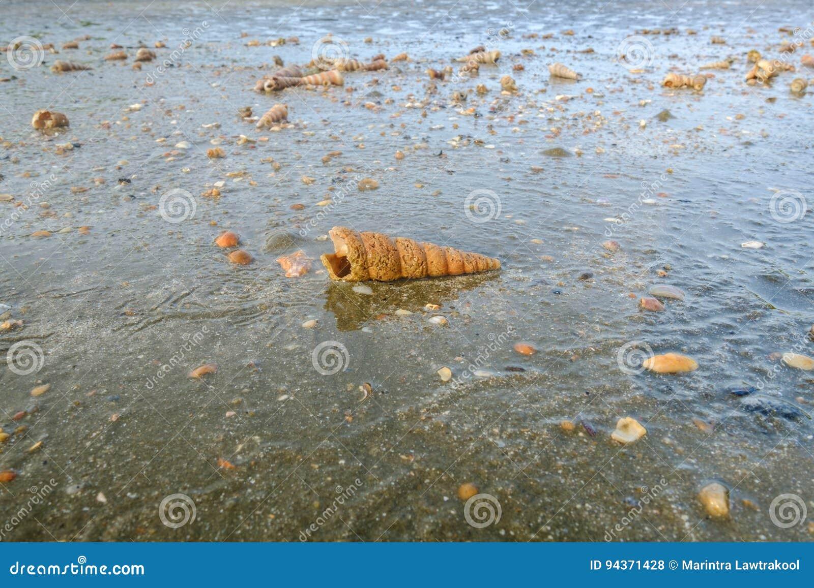 Shells die na het laten vallen van het overzees verschijnen