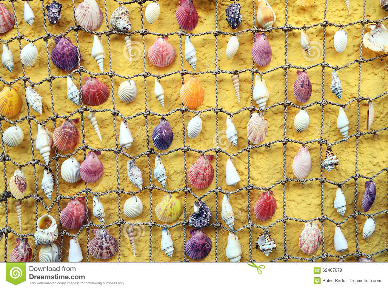 Shells hanging on the rope stock photo. Image of rope - 62407678