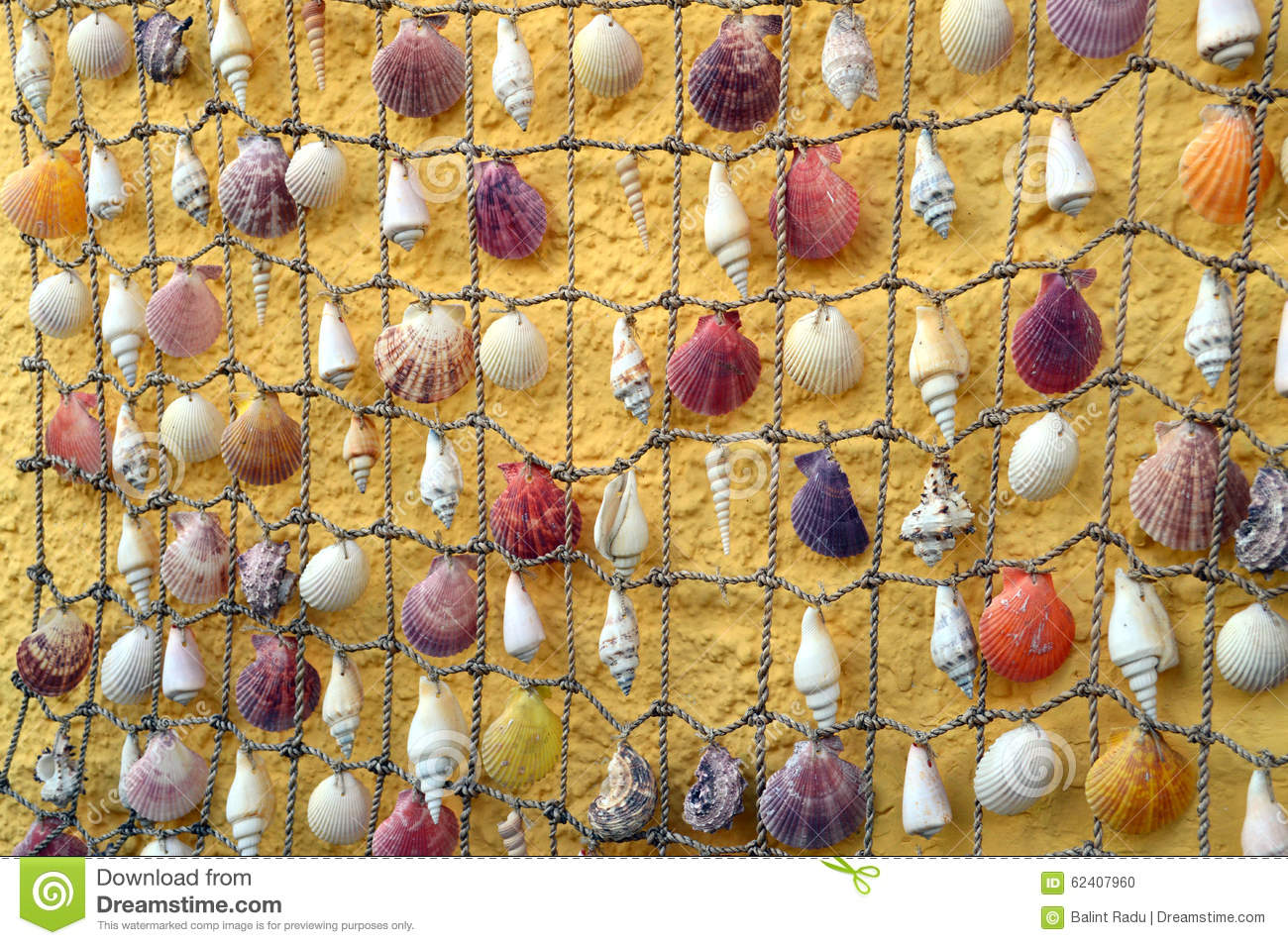 Shells hanging on the rope stock photo. Image of sand - 62407960