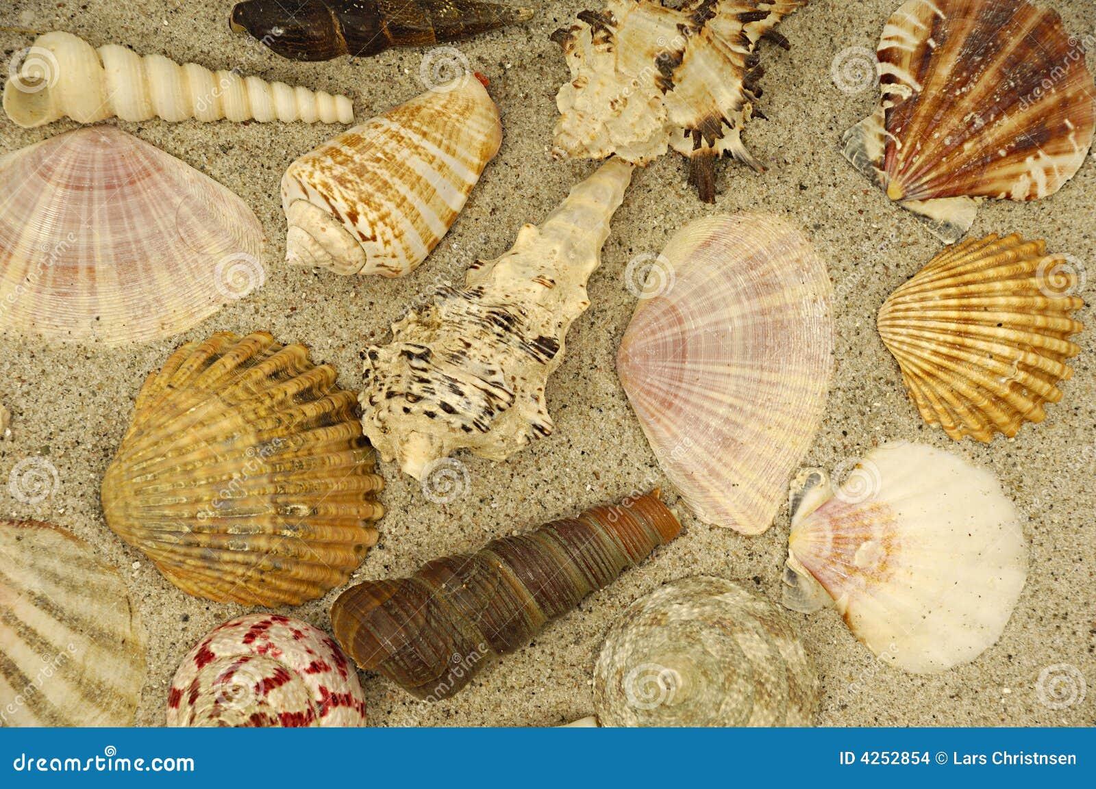 Shells in het zand