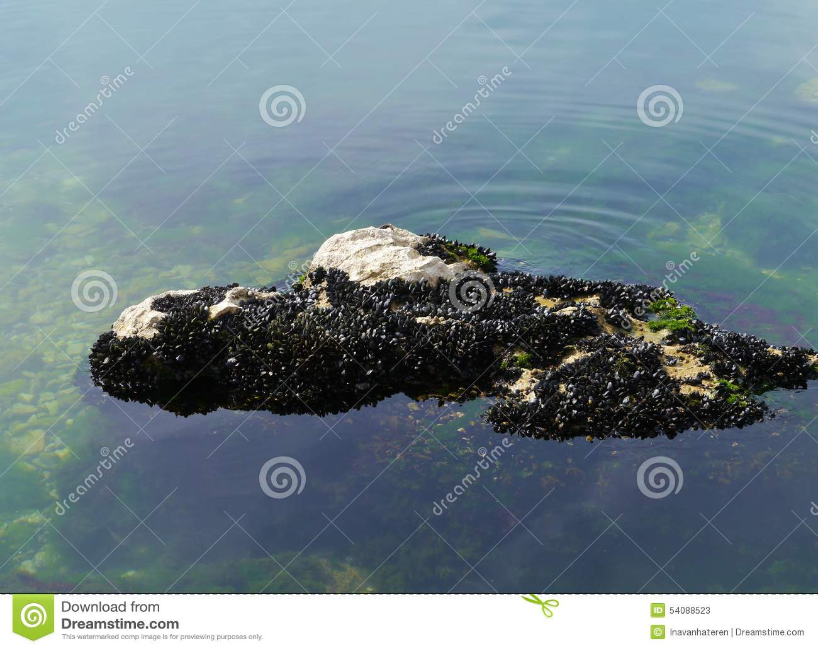 Shells op een rots in het Middellandse-Zeegebied