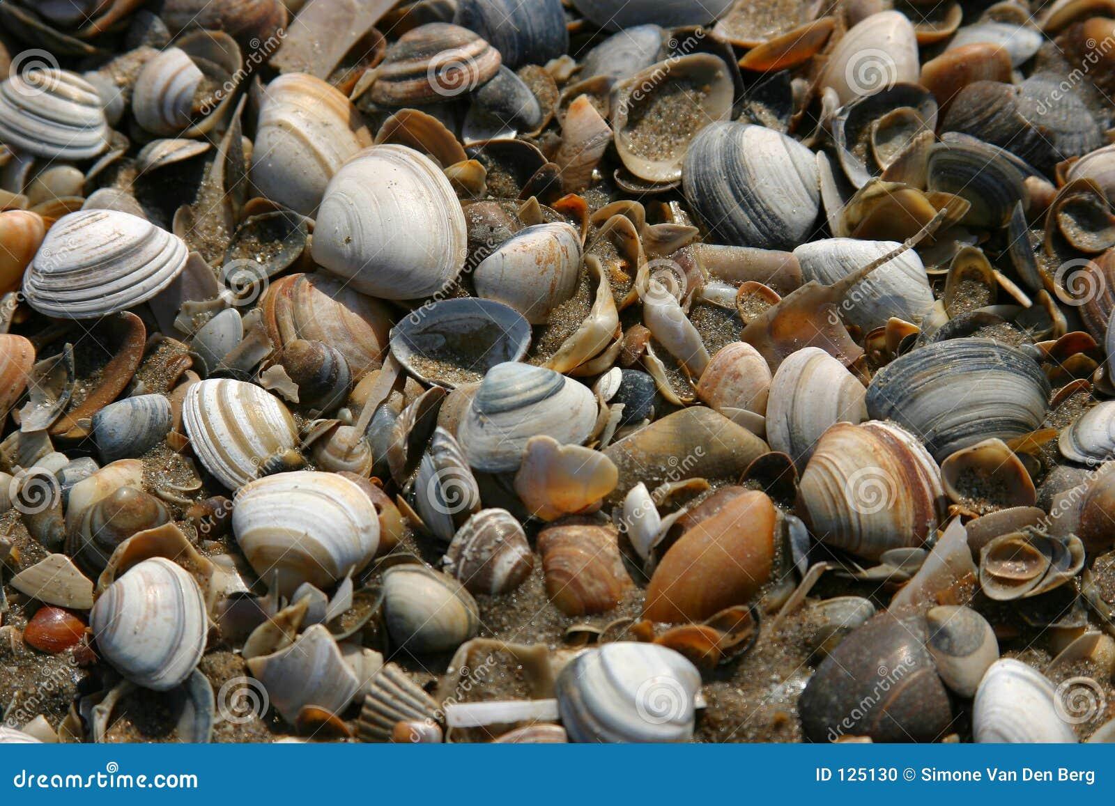 Shells op het strand