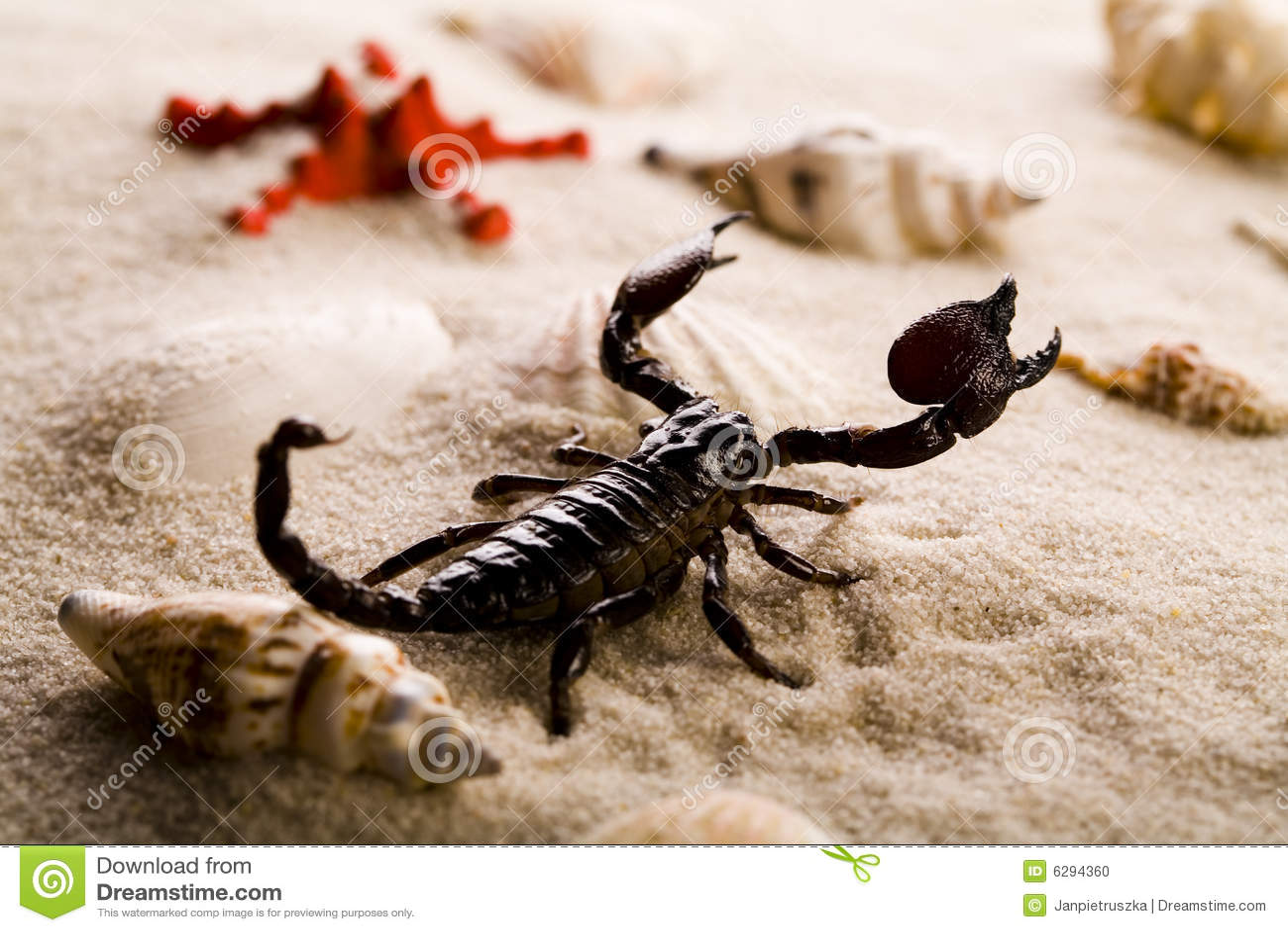 shells sand und skorpion stockfoto bild 6294360. Black Bedroom Furniture Sets. Home Design Ideas