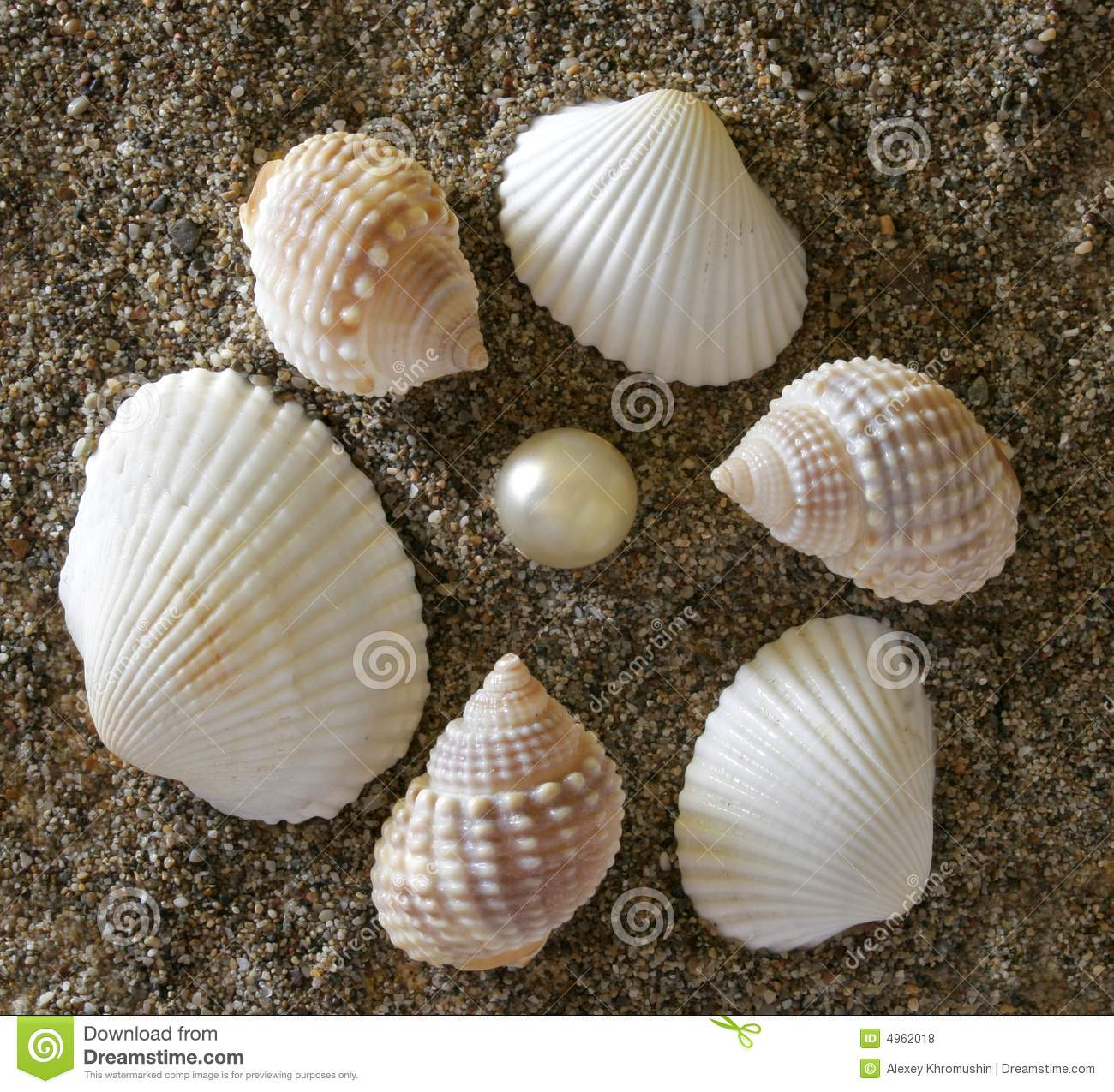 shells and stones royalty free stock photos