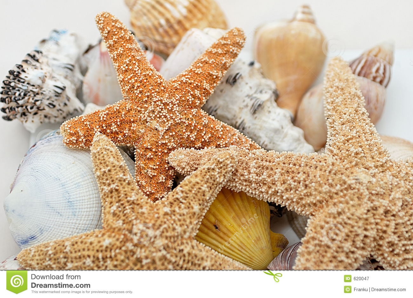 Shells van de zeester ANS