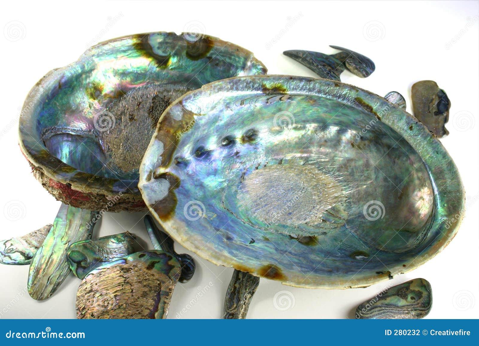 Shells van Paua