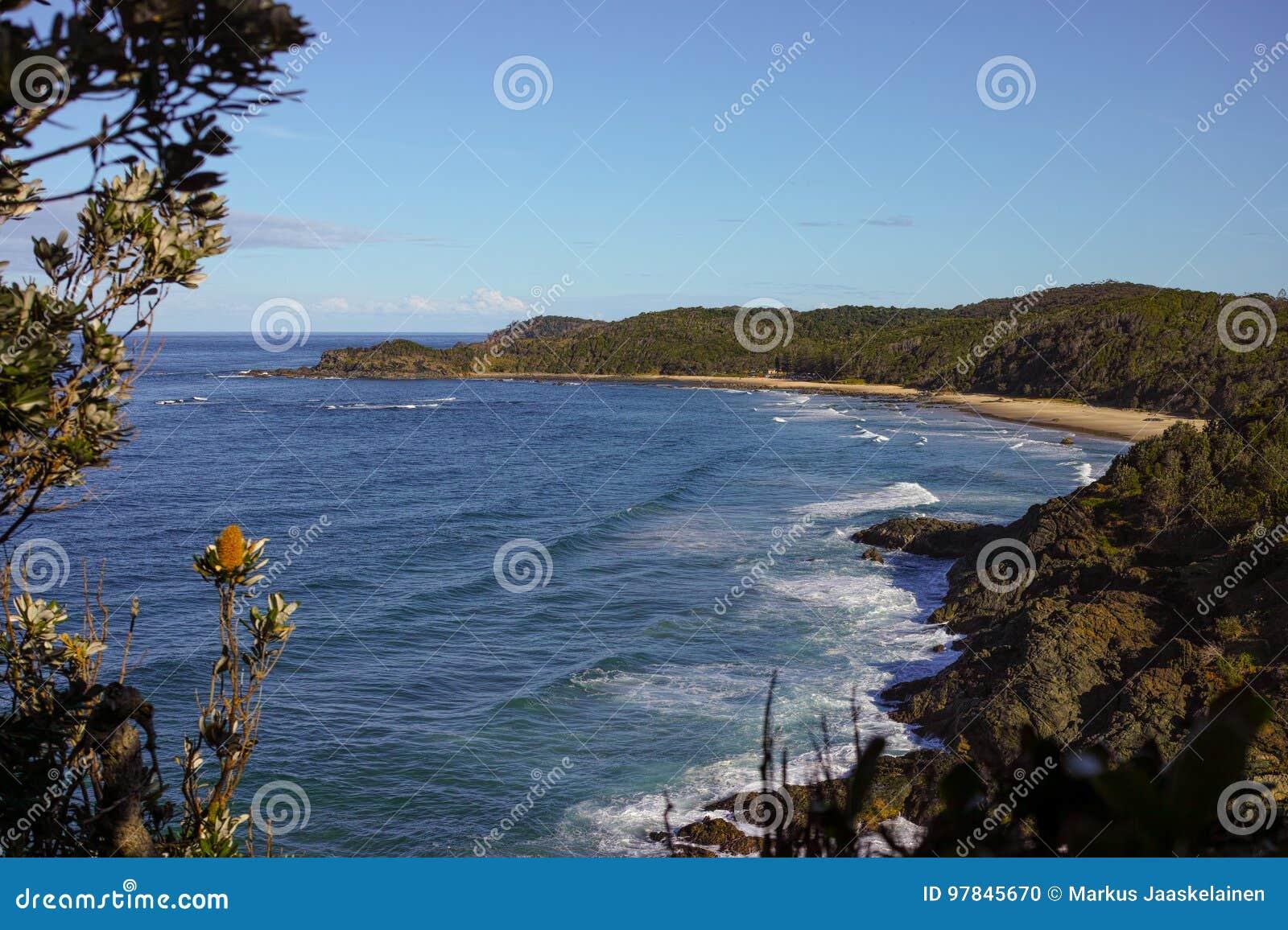 Shelly plaża Widzieć od Nobbys głowy przy Portowym Macquarie Australia