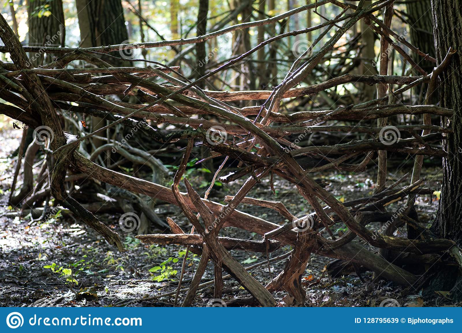 A shelter made of wood branches in forest