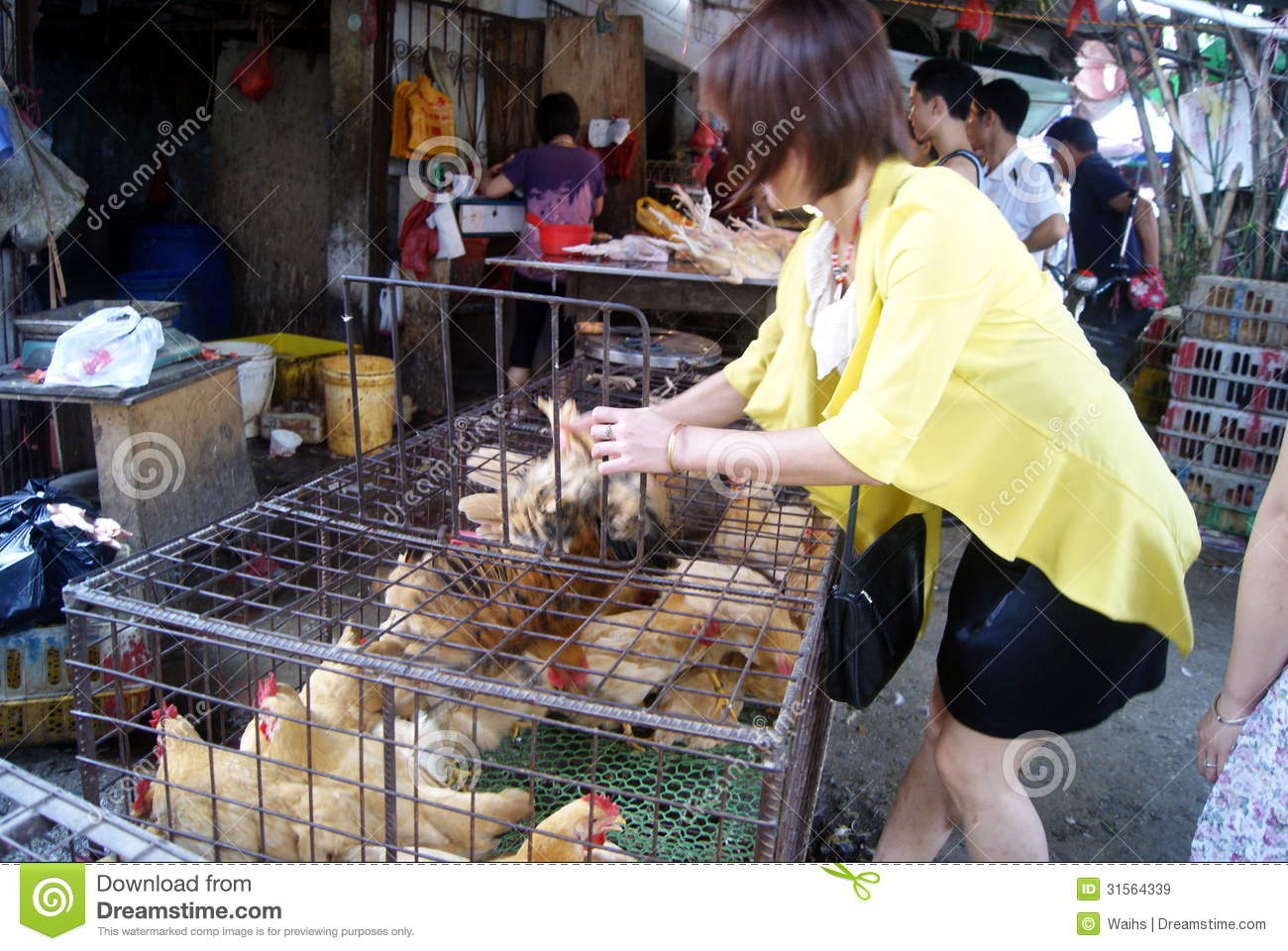 Shenzhen China: Sales Of Poultry Editorial Stock Image ...