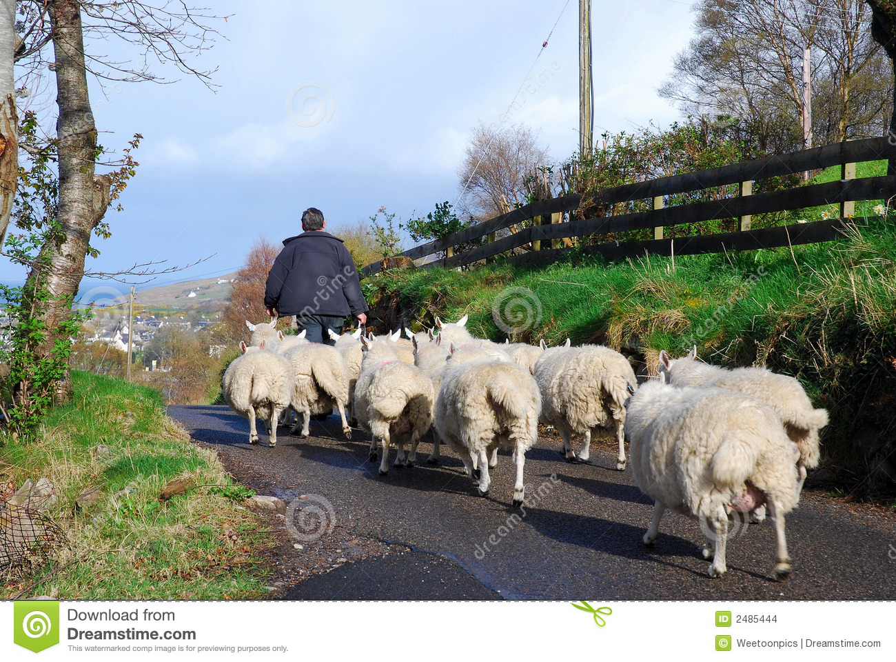 Shepherd With Flock.