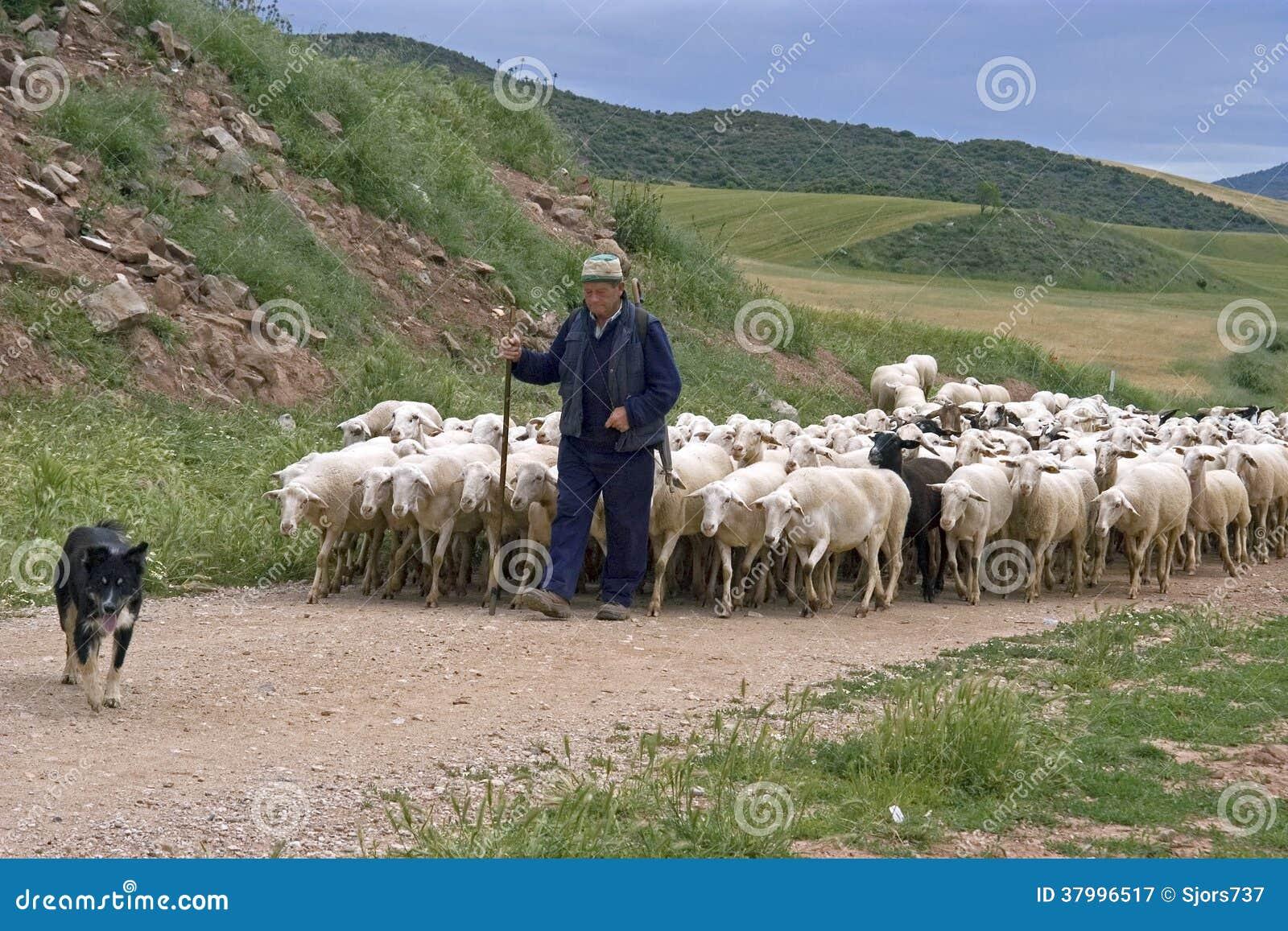 Shepherd con la multitud de ovejas en paisaje natural