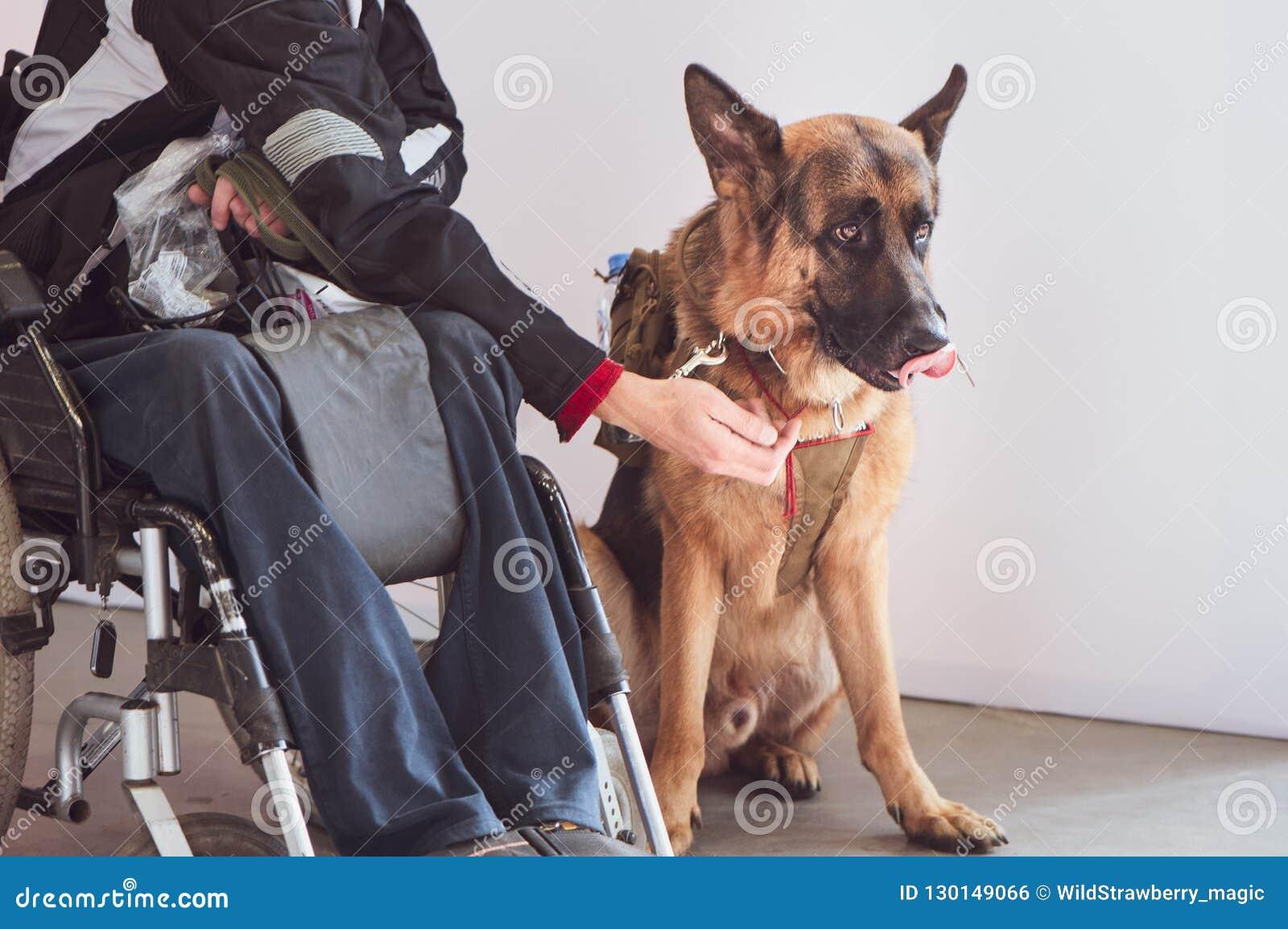Shepherd, preste serviços de manutenção ao cão com o proprietário o inválido