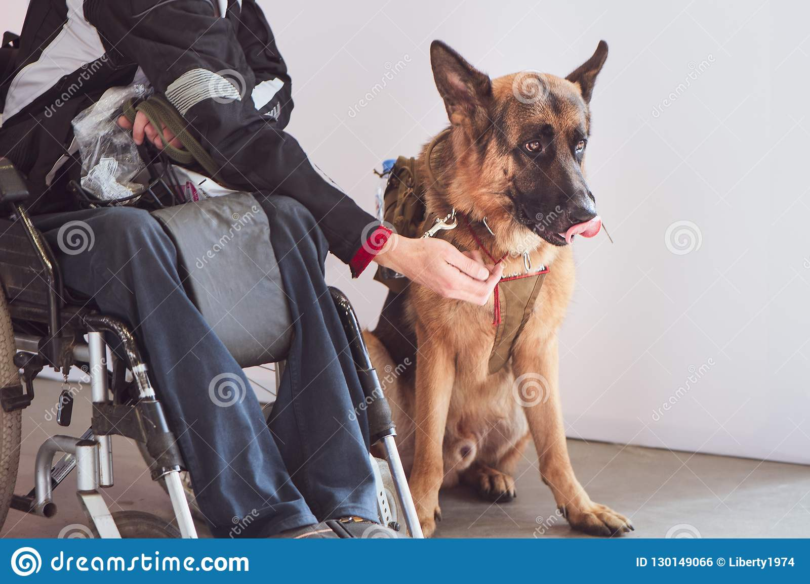 Shepherd, service dog with the owner the invalid