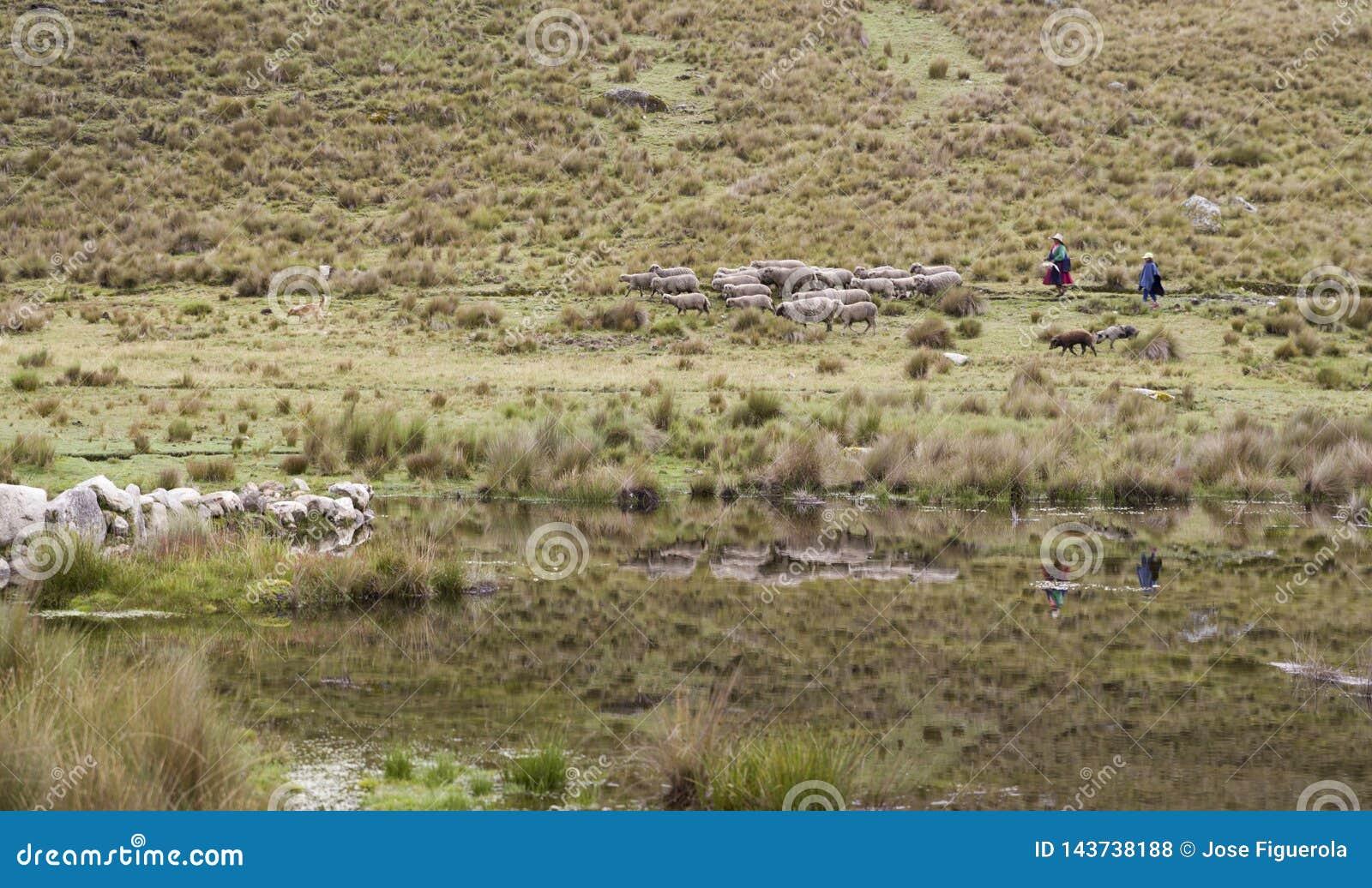 Shepherdess και κόρη με τα πρόβατα στη λιμνοθάλασσα των Άνδεων Περού