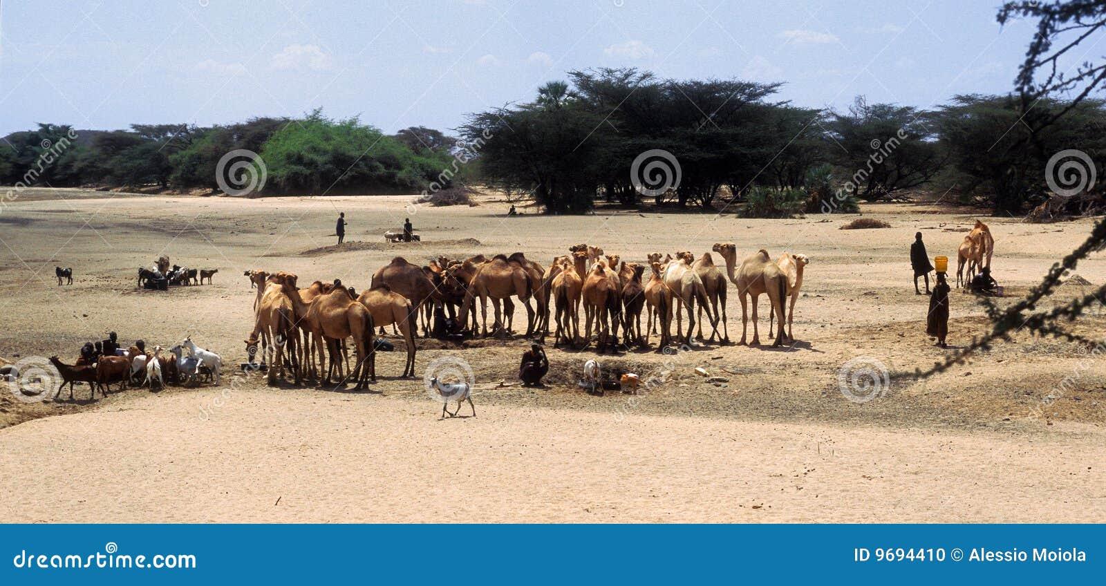 Shepherds Turkana (Kenya)