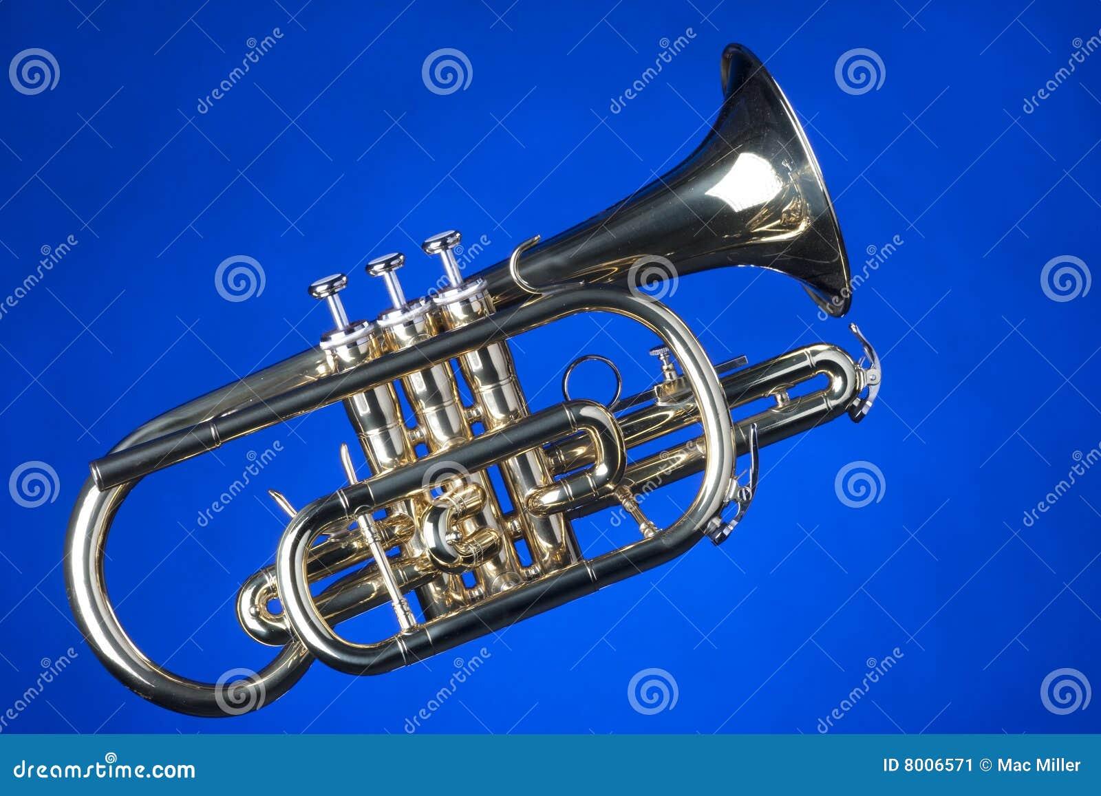 Sheppards bleus de l escroc s de cornet