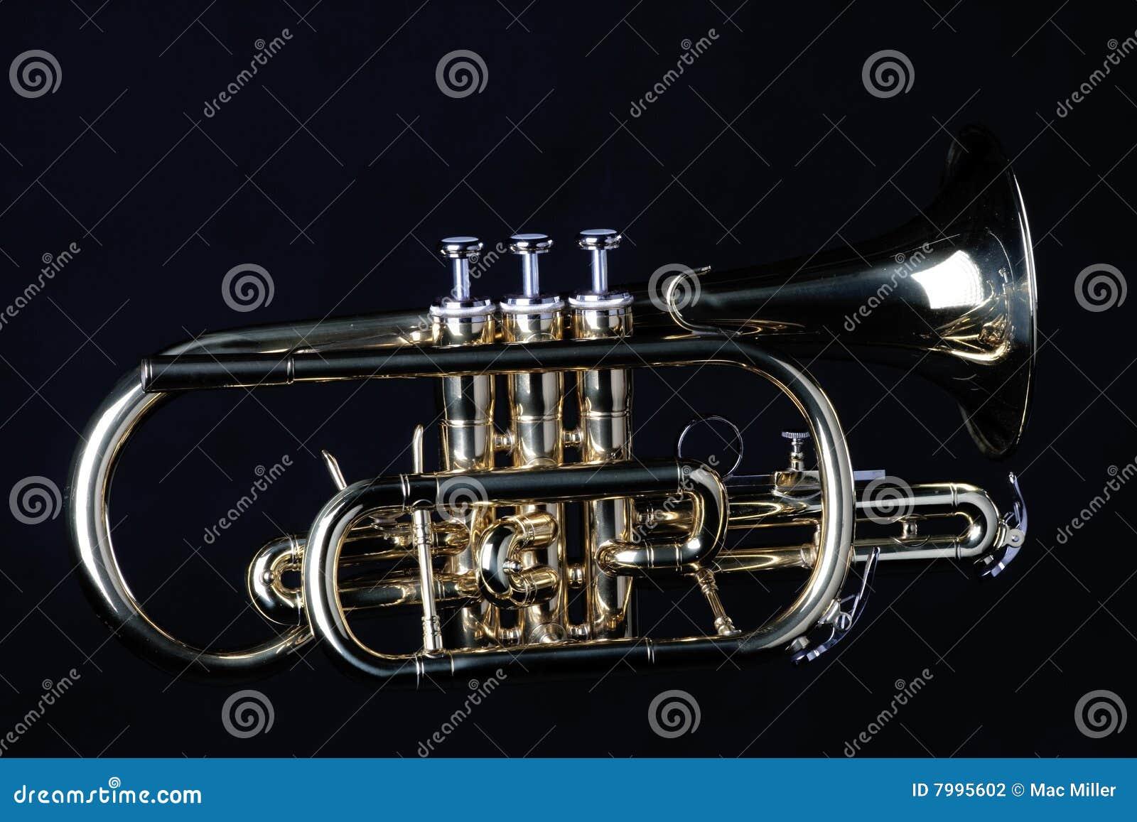 Sheppards noirs de l escroc s de cornet
