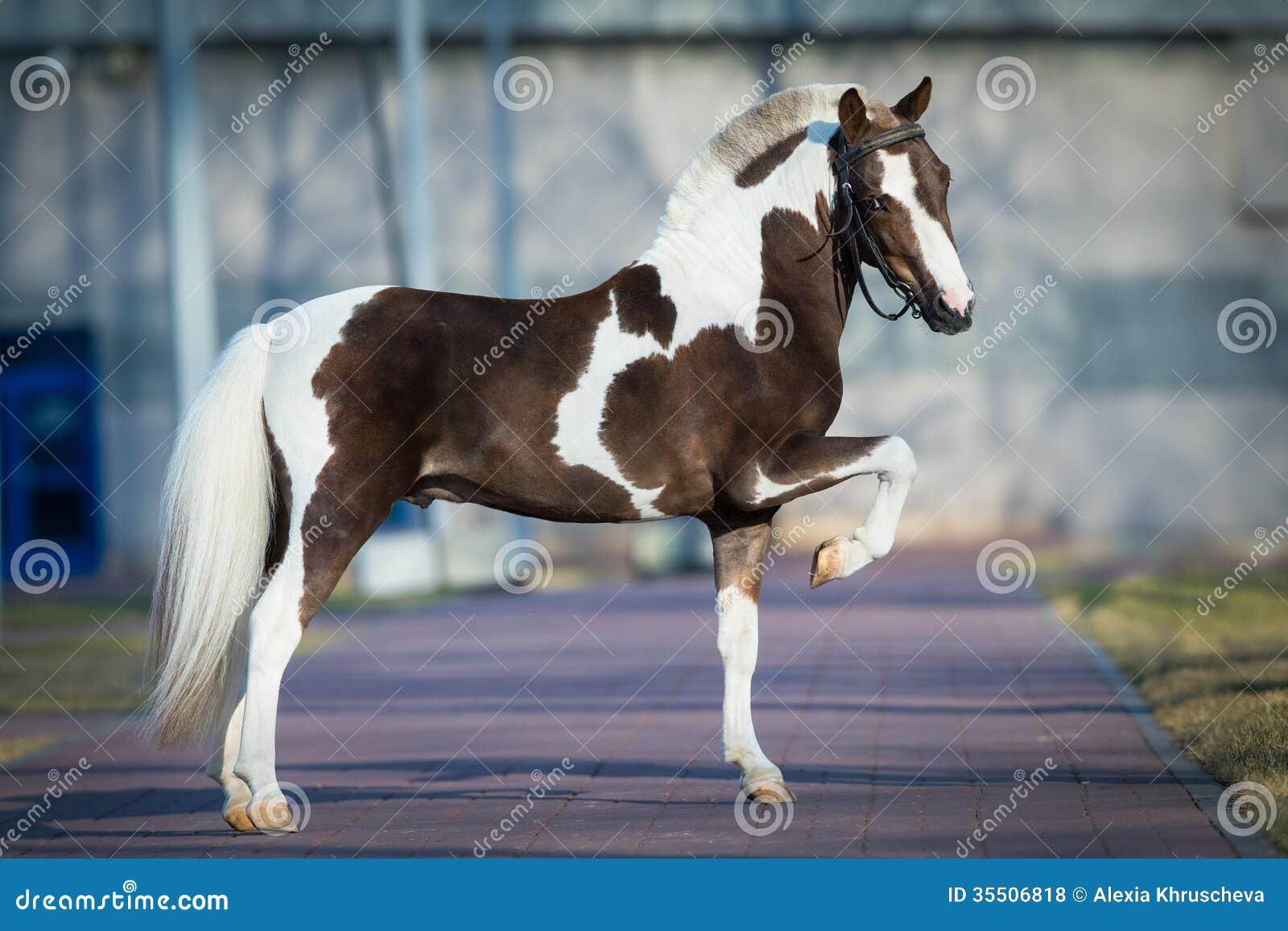 Shetland Pony Stock Photo Image Of Pony Nobody