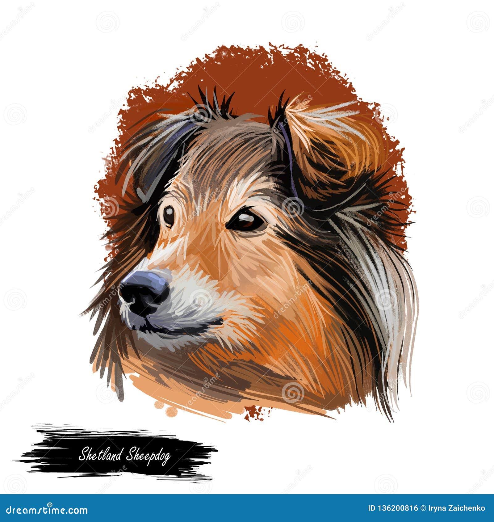 Shetland sheepdog purebred domesticated animal digital art. Canine watercolor portrait closeup, mammal with long fur