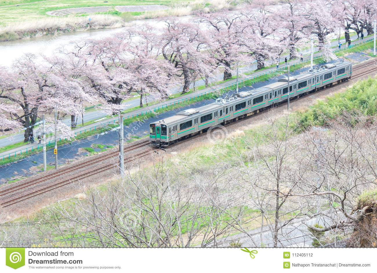 Shibata, Miyagi, Tohoku, Япония на 12,2017 -го апреля: Линия поезд и вишневые деревья Tohoku МЛАДШЕГО вдоль речных берегов Shiroi