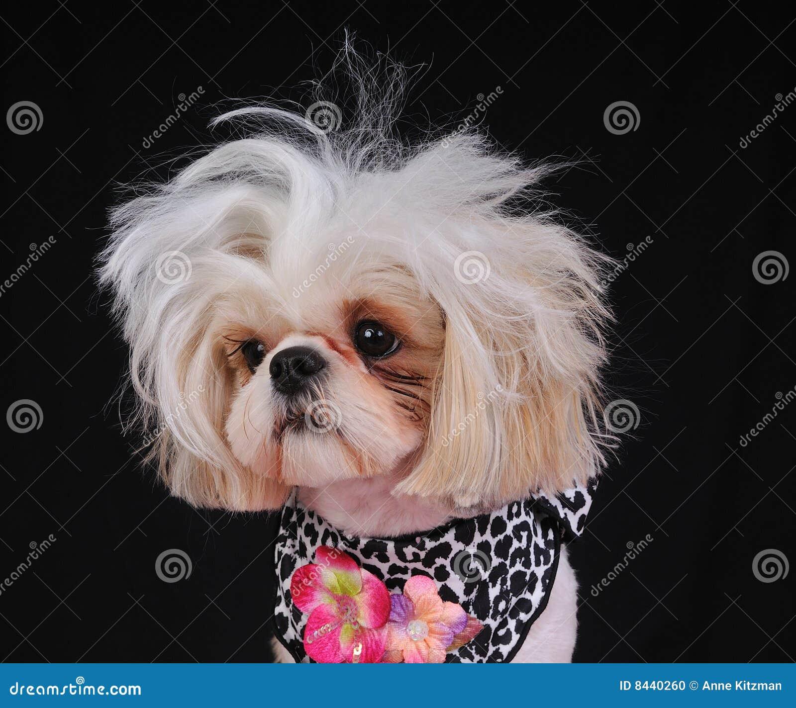 how to cut dog hair shih tzu