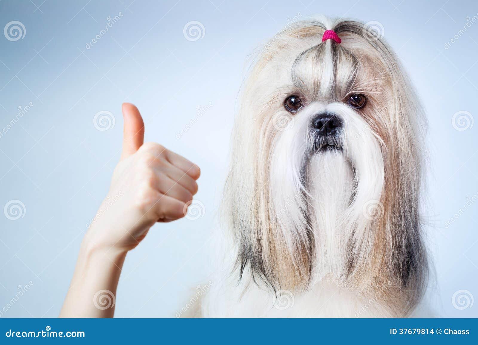 Shih tzu dog handsign